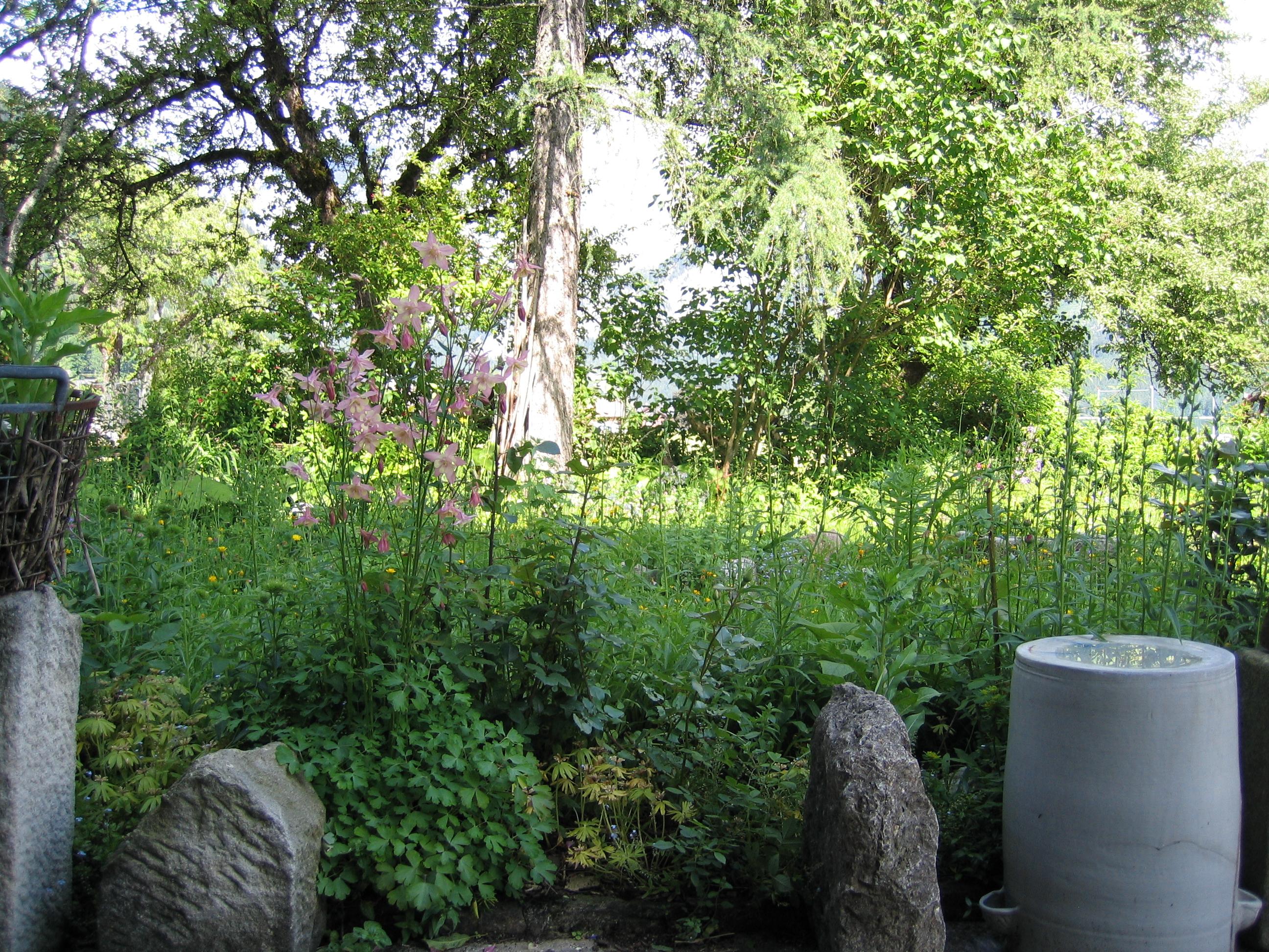 Naturgarten der vegan vegetarisch geführten Leitnervilla
