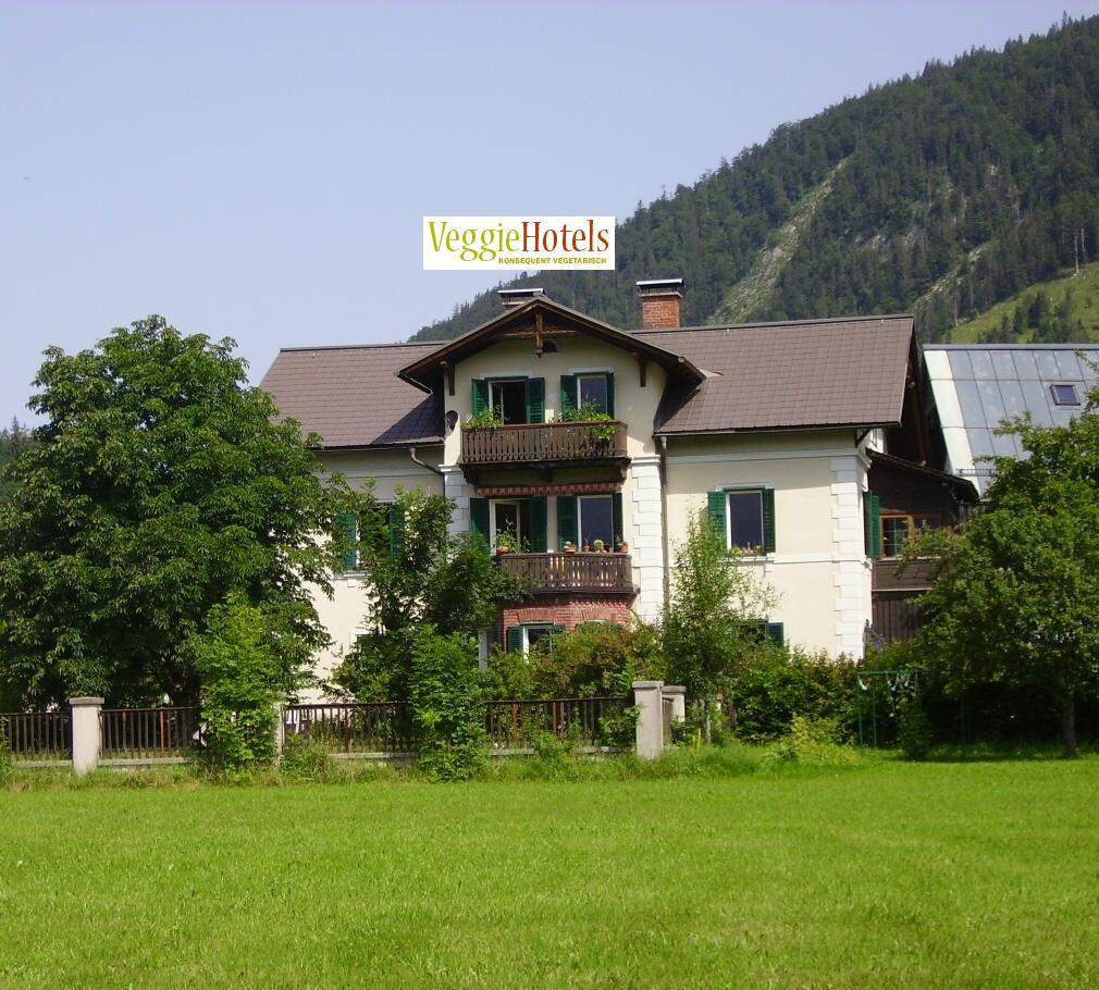 Essen zum Altausseer Narzissenfest Leitnervilla Staudenknöterich vegan vegetarisch