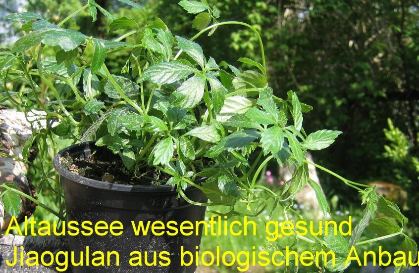-Altaussee biologisch statt GiftTips-giftfreier-Garten-Leitnervilla.-