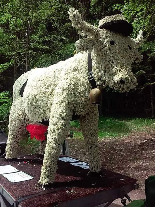 Altaussee wesentlich gesund Narzissenfest Kuh mit Steirerhut