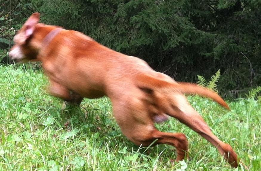 Ferienwohnung Altaussee mit Hund Leitnervilla