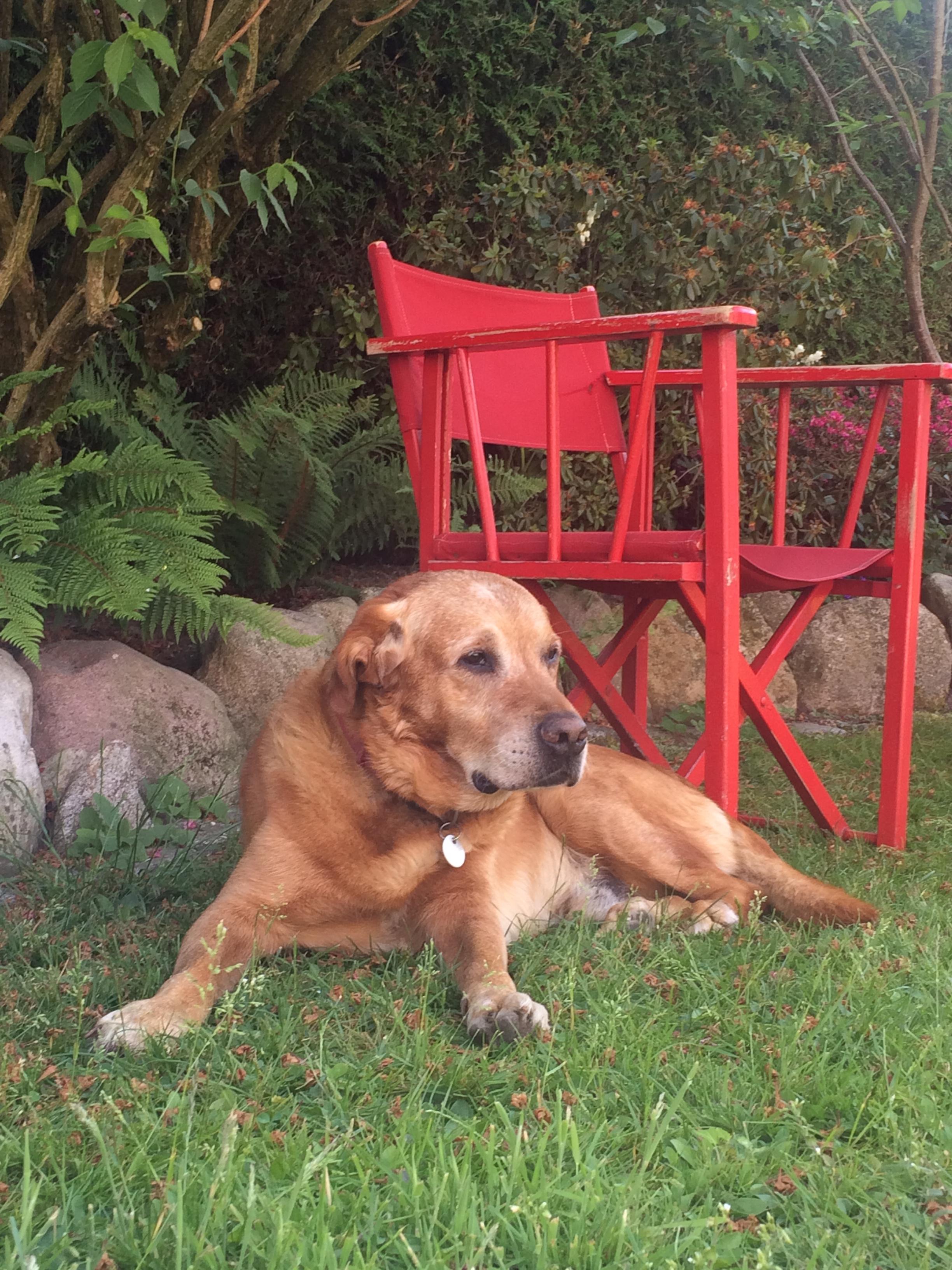 Picasso Stuhl mit Hund
