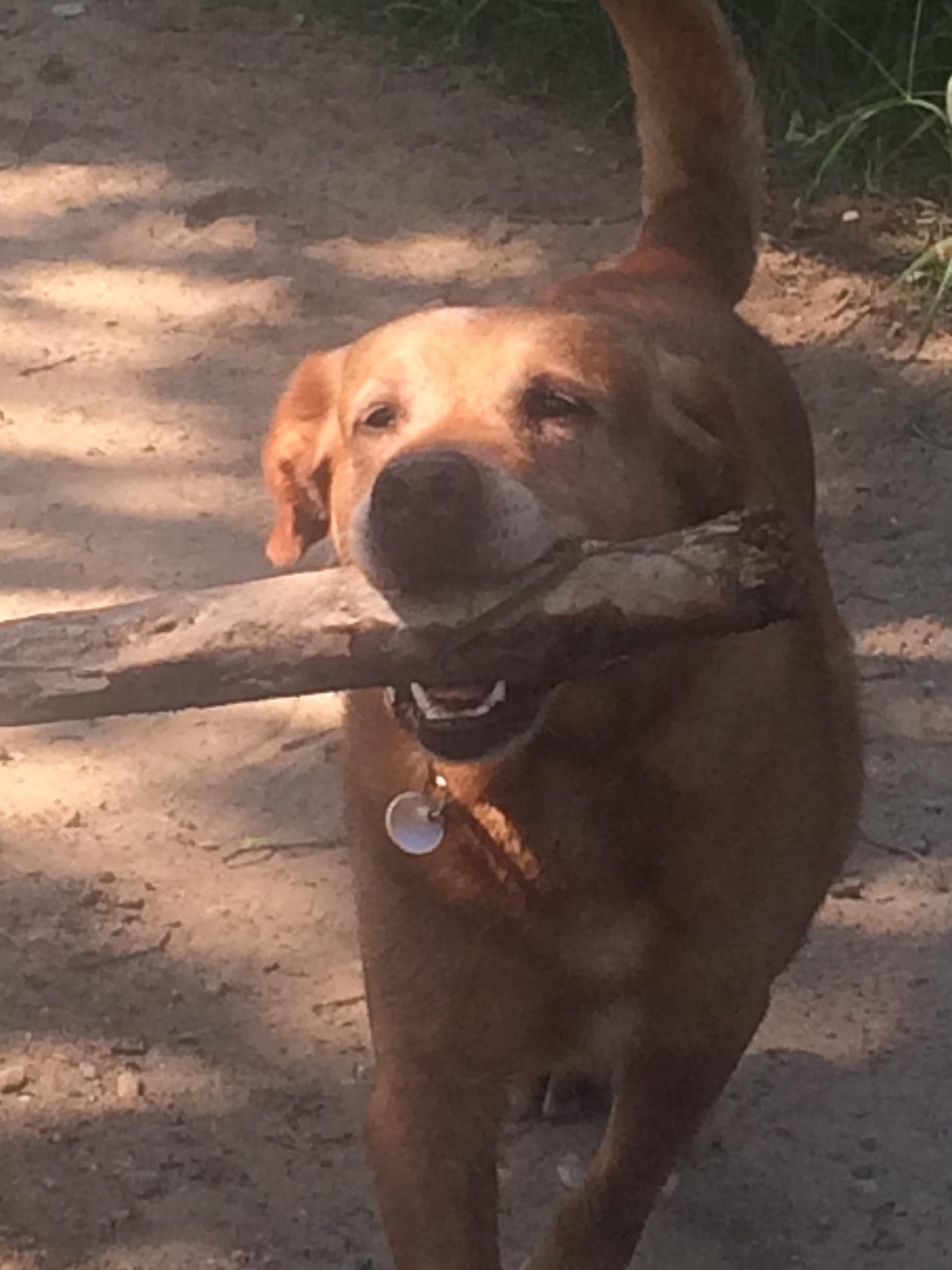 Altaussee Ferienwohnung mit Hund