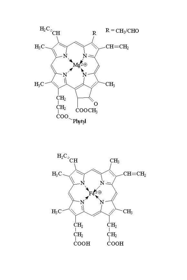 Zahnpasta ohne biogene Amine Chlorophyllin der chemische Zwilling des Hämoglobin