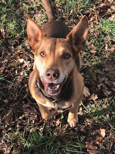 entzündetes Zahnfleisch beim Hund