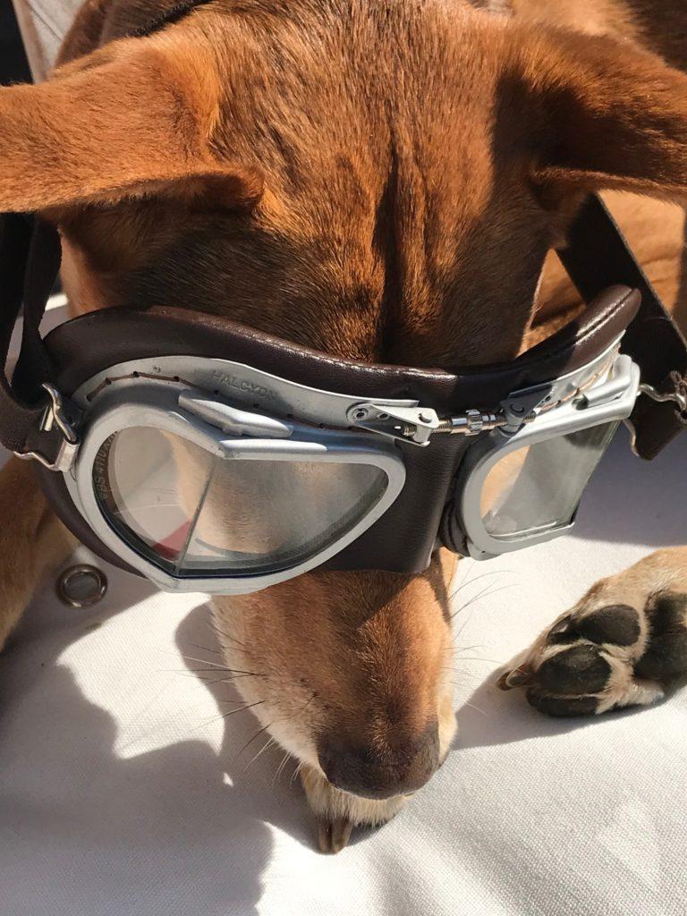 Hundediven als Gast der Leitnervilla Altaussee